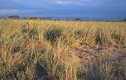 K4 modules biomes image of some grasslands voltagebd Choice Image