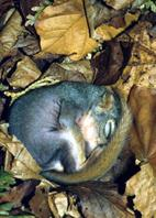 Image Of A Squirrel That Is Sleeping.