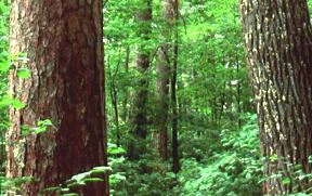 Image Of A Deciduous Forest.