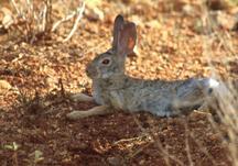 Imagen de un conejo.